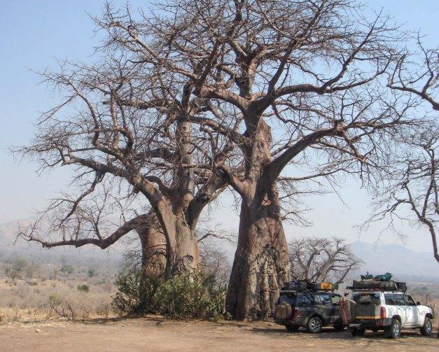 Baobab Forest - Chitake Springs