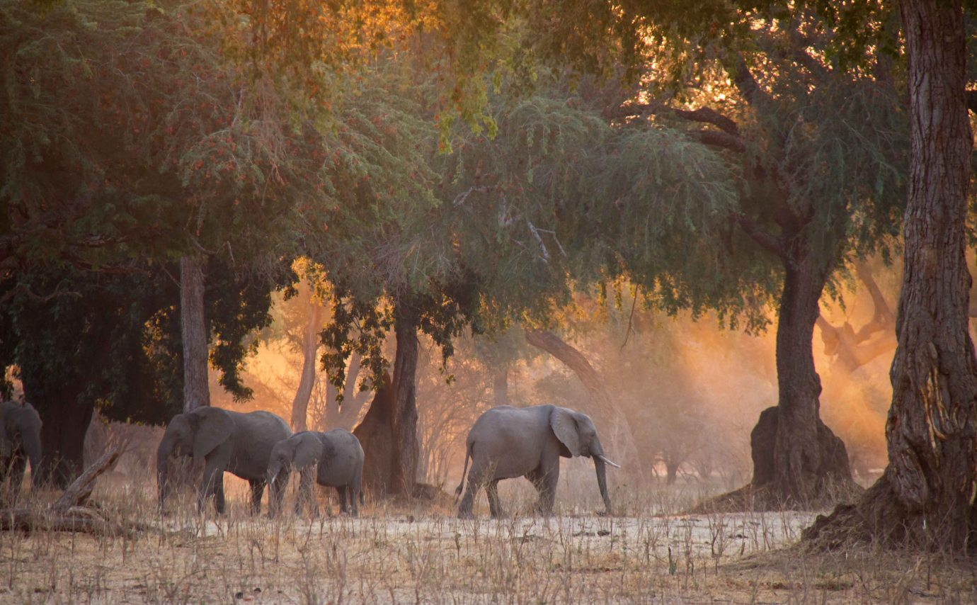 Mana Pools - landscaptes fit for an easel