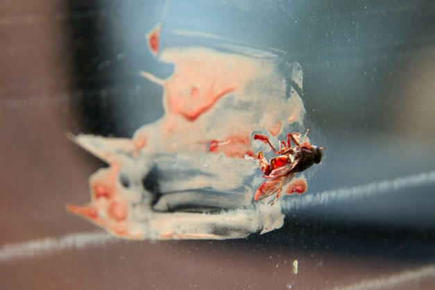 The tsetse fly that met it's fate wedged between a cigarette box and my window. Sure that's my blood... Little bastard!!